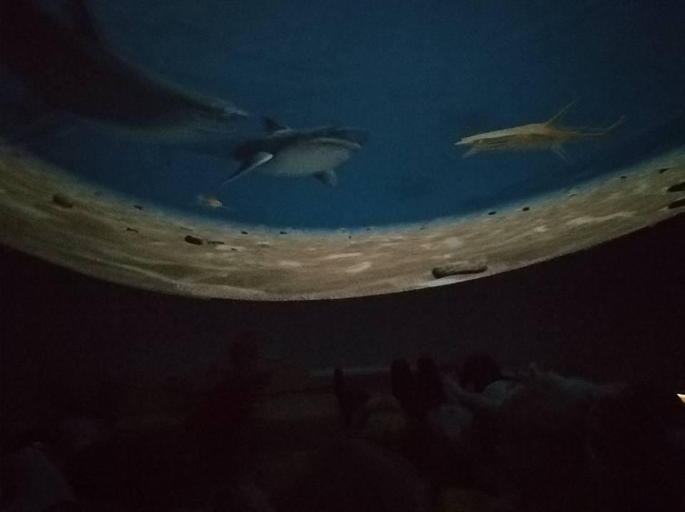 Kino v MŠ – Vodní svět
